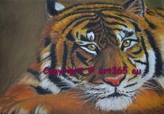 tiger, pastel drawn