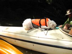 Ivy can sleep anywhere Kayaking, Ivy, Sleep, Canning, Home Canning, Kayaks, Conservation, Hedera Helix