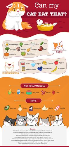 Infographic: Which Human Foods can my cat eat? - Katzenworld - Pets - We all love treating our cats like babies, don't we? Don't deny it! And who can blame us? Cat Care Tips, Pet Care, Foods Cats Can Eat, What Cats Can Eat, Human Food For Cats, Homemade Cat Food, Cat Info, Dry Cat Food, Pet News