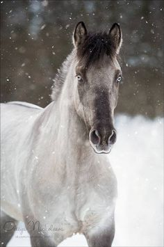 Like If Someone Turned A Wizard Into A Horse — russianhorses: Yakutian Horse stallion Oskar . animals silly animals animal mashups animal printables majestic animals animals and pets funny hilarious animal Most Beautiful Horses, All The Pretty Horses, Animals Beautiful, Cute Horses, Horse Love, Horse Photos, Horse Pictures, Animals And Pets, Cute Animals