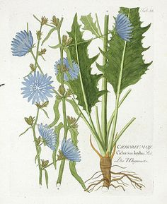 Ferdinand Vietz Botanical Prints 1800
