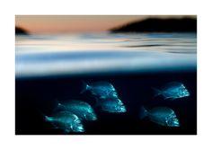 Half-Underwater Photos Showing the World Beneath by Matthew Smith. Underwater Plants, Underwater Pictures, Ocean Photos, Underwater World, Gopro Underwater, Underwater Creatures, Under The Water, Under The Ocean, Underwater Photography