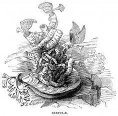 shellfish clip art, black and white graphics, marine animals illustration, starfish, acorn barnacles limpet shell, serpulae