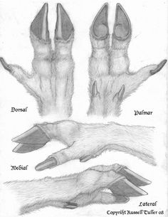 hoof/hand tutorial