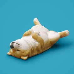 ZOO ZOO ZOO「のんきだ寝」の柴犬くんのキレイな写真をアップしていなかったのでアップします。やっぱり、この子の「のんき感」半端ないです。 #のんきだ寝 #パンダの穴 #ガチャ #Pandanoana