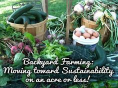 Backyard Farming- ways to grow a substantial amount of your familys food on less than an acre