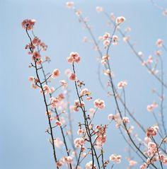 Artspace Image 4: Sally Gall - Pink Blossoms  #Artspace #Birchbox