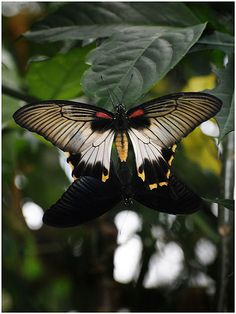 Butterfly Exhibit (31)   by James Francis Photography, via Flickr