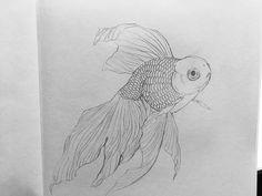 Pencil Drawing Patterns Best Of Pencil Drawings Of Fish Fish Drawings, Cute Drawings, Pencil Drawings, Animal Sketches, Animal Drawings, Drawing Sketches, Goldfish Tattoo, Drawn Fish, Monochromatic Art