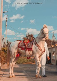 Most Beautiful Horses, All The Pretty Horses, Animals Beautiful, Horse Costumes, Animal Costumes, Zebras, Rare Albino Animals, Different Horse Breeds, Marwari Horses