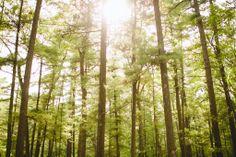 Camp Wing - Munroe Trees