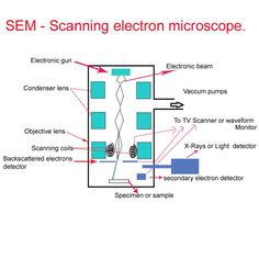 Scanning electron microscope definition, Principle, images, uses, etc. Scanning Electron Microscope, Definitions, Physics, Apps, Physics Humor, App, Scanning Electron Micrograph, Appliques, Physique