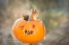 halloween traveler de geertweggen