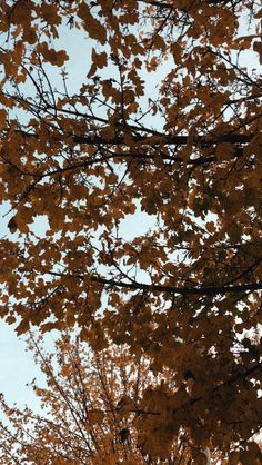 My Photos, Clouds, Outdoor, Outdoors, Outdoor Games, Outdoor Living, Cloud