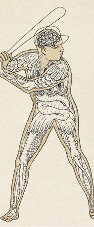 New York Times baseball fantastical biological illustration by Katie Scott