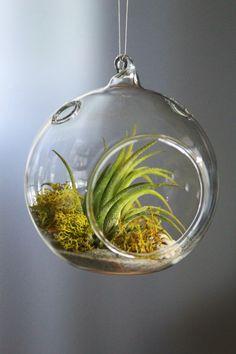 Air Plant Terrarium Kit. Indoor Garden. Glass Orb by GemsOfTheSoil
