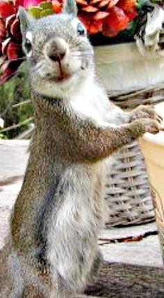 Happiest squirrel ever!