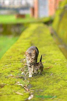 @_MATPOCKuH Доброе утро :) #Cats