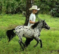 Miniature Appaloosa running with kid!