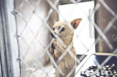 Shelter Chihuahua Begs For A Home In Moving Photos