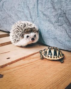 The Most Happiest Hedgehog In The World - Made My Day - Igel - Animals Wild Happy Hedgehog, Hedgehog Pet, Cute Hedgehog, Happy Animals, Animals And Pets, Cutest Animals On Earth, Tier Fotos, Cutest Thing Ever, Cute Friends