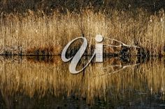 Autumn Lake, Royalty Free Images, Italy, Celestial, Stock Photos, Abstract, Brown, Outdoor, Summary