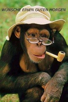 22 Funniest Monkey Face Pictures That Will Make You Laugh Funny Monkey Pictures, Face Pictures, Memes Super Graciosos, Funny Spanish Memes, Spanish Quotes, Chimpanzee, Cute Funny Animals, Funny Images, Animals Beautiful