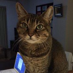 明日過ぎればひと山越えてブログとか電子書籍とかやれそう #lovecats #cats #cat #おやすみ