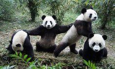 Wu-Pand Clan