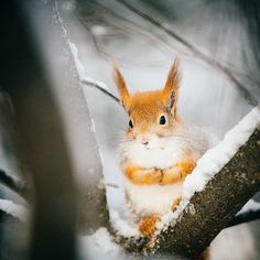 Just #Squirrel #Lapland #Finland � � # Lapland Holidays, Travel Destinations, Travel Tips, Travel Ideas, Finland Travel, Holiday Activities, Second World, Travel Photographer, Holiday Travel