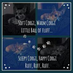 Soft Corgi