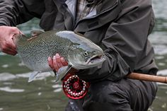 A beautiful seatrout from Lærdal river Norway. Fishing Reels, Fly Fishing, Norway, Photo Galleries, River, Gallery, Classic, Beautiful, Fishing