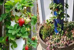 Fabriquer un jardin suspendu original et tendance pour fraisiers