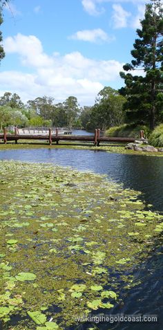 Lovely pond with plenty of birds. Gold Coast Australia, Natural Pond, Ponds, Water Features, Landscape Architecture, Botanical Gardens, River, Nature, Outdoor