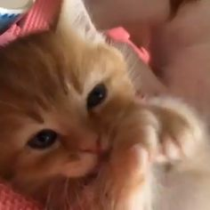 Cute Animals How To Draw Cute Baby Animals Playing Videos Cute Funny Animals, Cute Baby Animals, Animals And Pets, Funny Cats, Cats Humor, Humor Humour, Cat Memes, Cute Cats And Kittens, I Love Cats