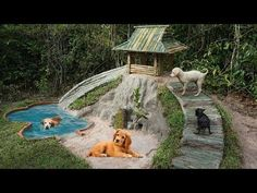 Building most beautiful Mini Swimming Pool and Bamboo Dogs House Dog Friendly Backyard, Dog Backyard, Dog Fort, Puppy Playground, Dog Swimming Pools, The Blue Boy, Dog Station, Dog Garden, Cool Dog Houses