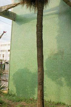 William Eggleston, Untitled (Palm Tree Trunk, Green Wall, Cuba), 2007.