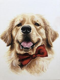 Baby Animals Pictures, Cute Puppy Pictures, Cute Baby Animals, Animals And Pets, Funny Animals, Dogs Golden Retriever, Retriever Dog, Golden Retrievers, Pet Dogs