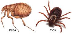 Flea and Ticks Control For Your Pet