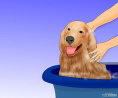 Groom a Dog Step 4.jpg