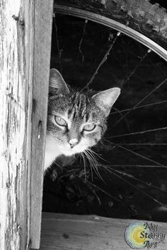 Limited edition, 8x10, black & white, farm cat photographic print with mat via Etsy