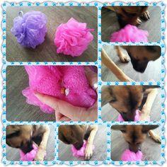 Spel 7 (hondenspel hond spel denkwerk hersenwerk brain dog game play diy) www.facebook.com/denkspellenvoorjehond