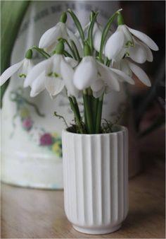 Vintergækker og en lillebitte vase – Dalsgaard i Skivholme