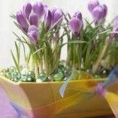 Cesnakové trojhranky (fotorecept) - recept   Varecha.sk Toast, Plants, Plant, Planets