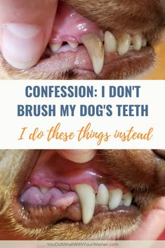 I Dont Brush My Dogs Teeth. I Did This Instead - a home routine plus anesthesia-free doggy dental cleaning for clean dog teeth. I Dont Brush My Dogs Teeth. I Did This Instead - a home routine plus anesthesia-free doggy dental cleaning for clean dog teeth. Dog Health Tips, Pet Health, Dog Care Tips, Pet Care, Dog Dental Care, Dental Teeth, Puppy Care, Don't Care, Yorkshire Terrier Puppies
