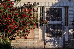 #Mexico #Chihuahua #light #window #flowers #contrast #harmony #melancholy #sunlight