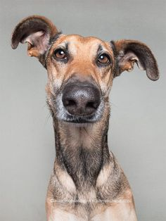 Expressive Dog Portraits by Elke Vogelsang Funny Animal Faces, Funny Animal Photos, Animal Pictures, Cute Pictures, Funny Animals, Cute Animals, Pet Dogs, Dog Cat, Doggies