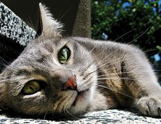 Quick Tip: How To Take Great Cat Photos | Popular Photography
