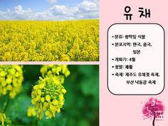 봄 활동자료 봄에 피는 꽃 PPT : 네이버 블로그 Blog, Movies, Movie Posters, Films, Film Poster, Blogging, Cinema, Movie, Film