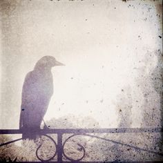 Magpie in the morning (iPhone) Magpie, Iphone, Painting, Art, Art Background, Painting Art, Kunst, Gcse Art, Paintings